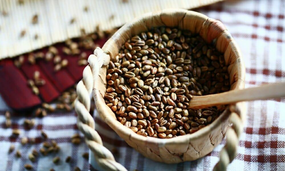 無糖、無咖啡因的小麥茶來自台中大雅土地的陽光和健康! - 6